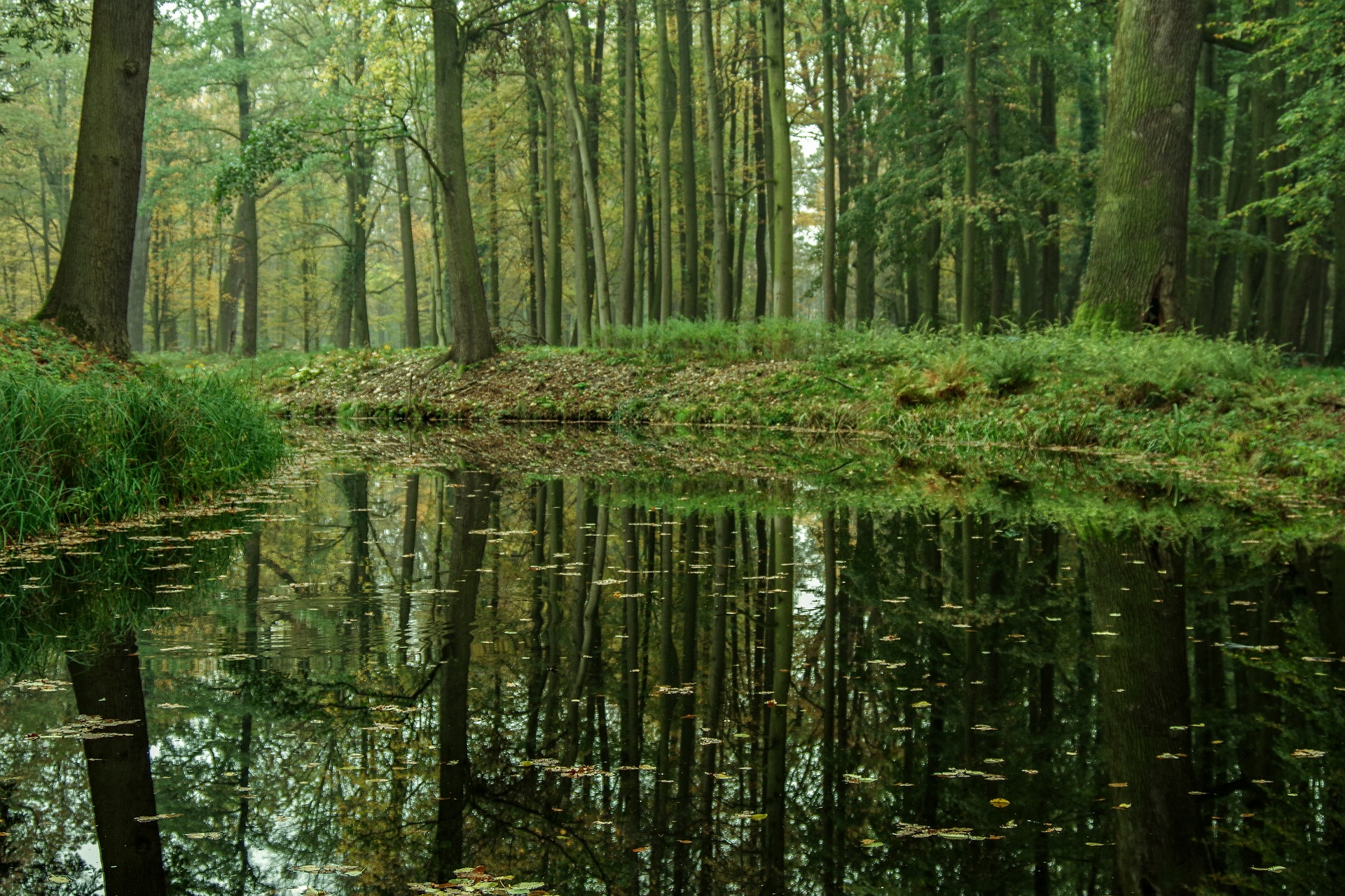 The Eerie Rusalka of Old World Problems